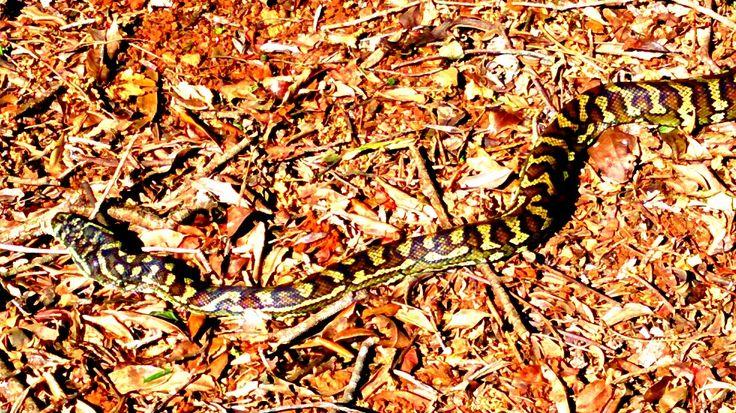 Pet snake!