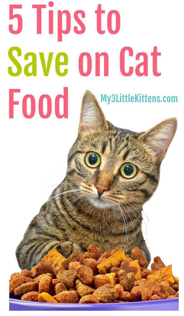 5 Tips To Save Money On Cat Food My 3 Little Kittens In 2020 Diy Cat Food Kitten Food Homemade Cat Food