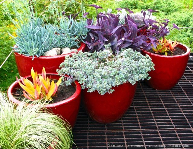 Mid-Season Container Maintenance Tips.  Baskets, Pots, Succulents, Trailing Annuals, Etc.  Photo: Michaela Medina - thegardenerseden.com