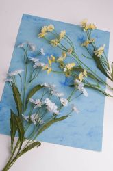 Middle School Life Science Activities: Be a Botanist: Make Herbarium Sheets