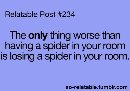 I was JUST talking about this the other day. Keep an eye on that sucker as if your life depends on itLaugh, Quotes, Relatable Posts, Truths, Funny Stuff, So True, I Hate Spiders, Things, True Stories