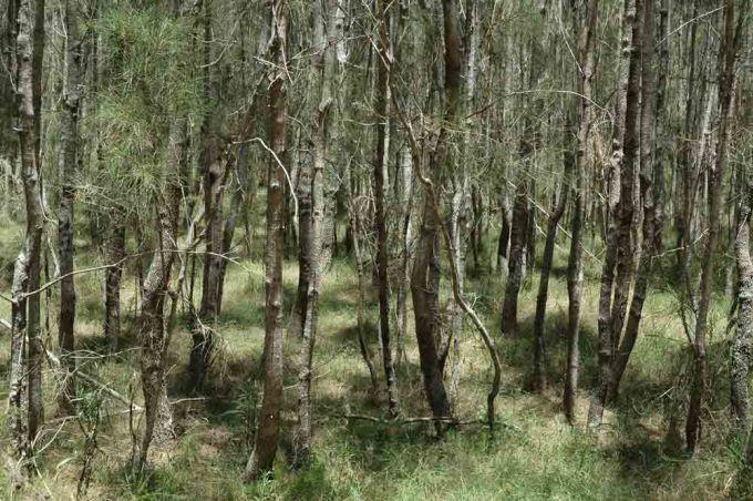 Billai Dhagun Circuit Track Walk Boondall Wetlands Boondall Brisbane (possible shoot location)