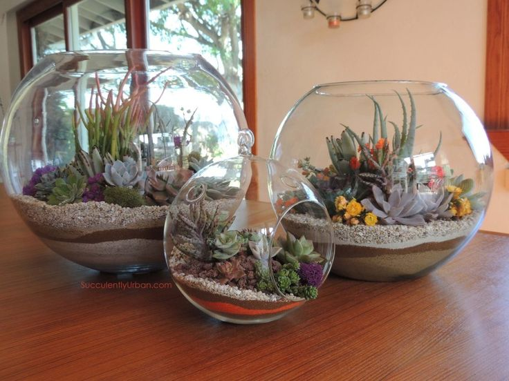 I would like to do a succulent terrarium with black and white sand in a long, low, asymmetrical glass bowl.