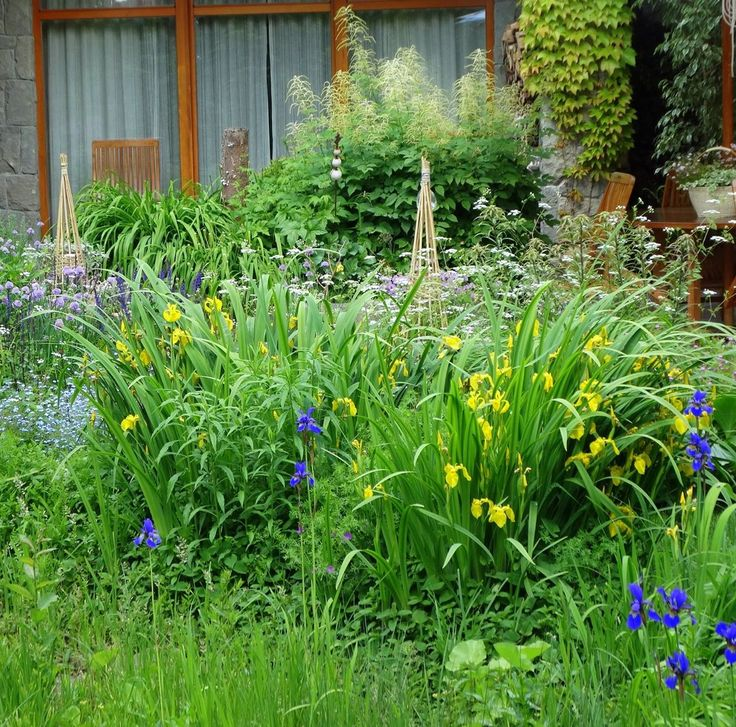 Iris sibirica and Aruncus sp.