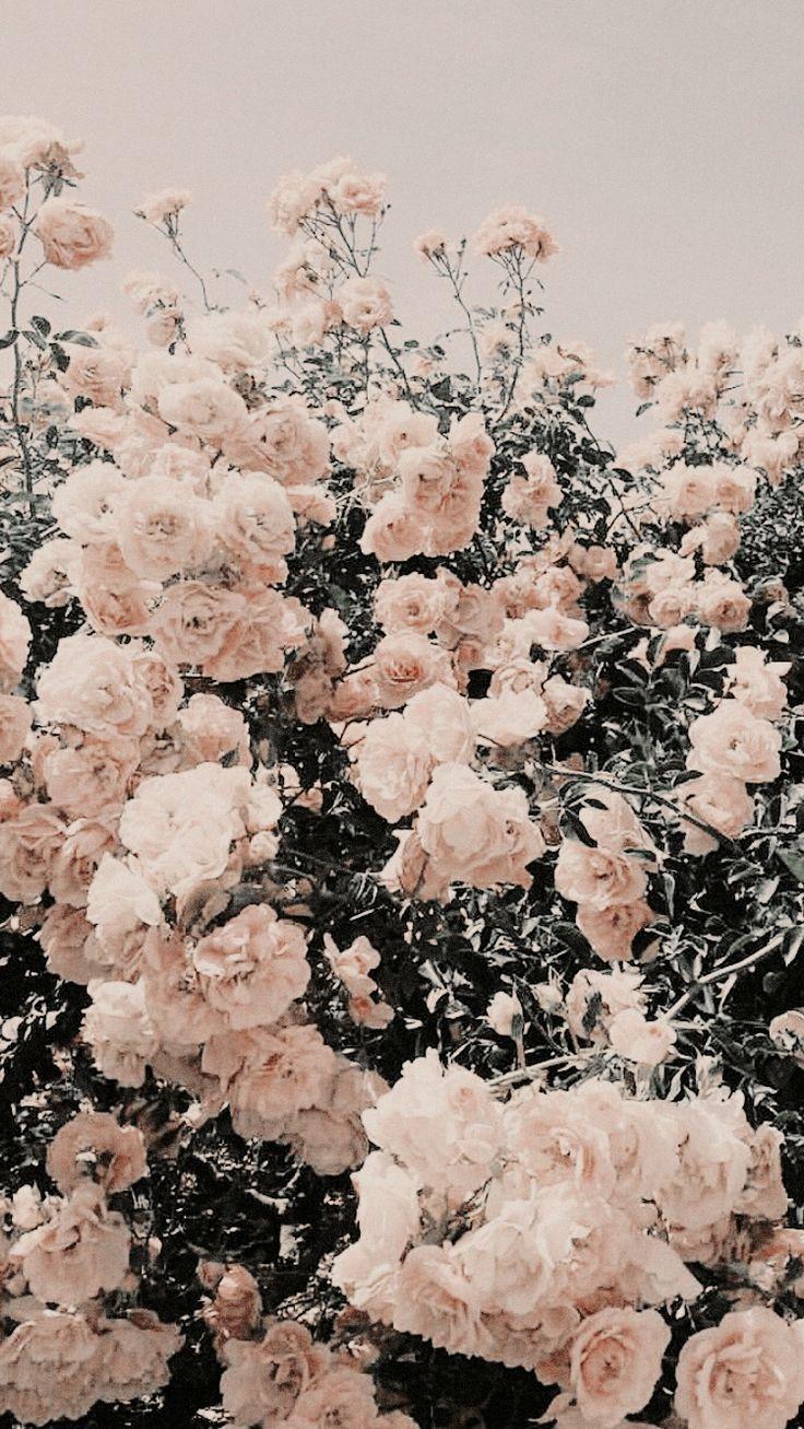 20 Blumen hintergrund iphone Ideen   hintergrund iphone, blumen ...