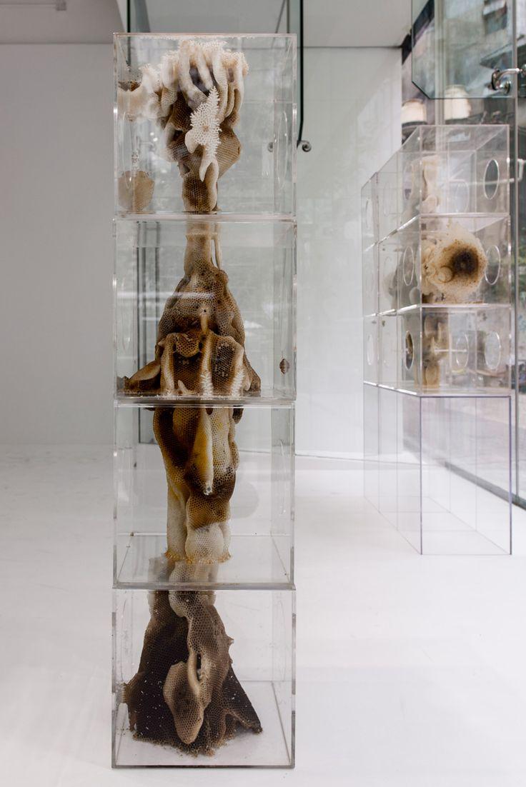 Beeswax Sculptures by Ren Ri