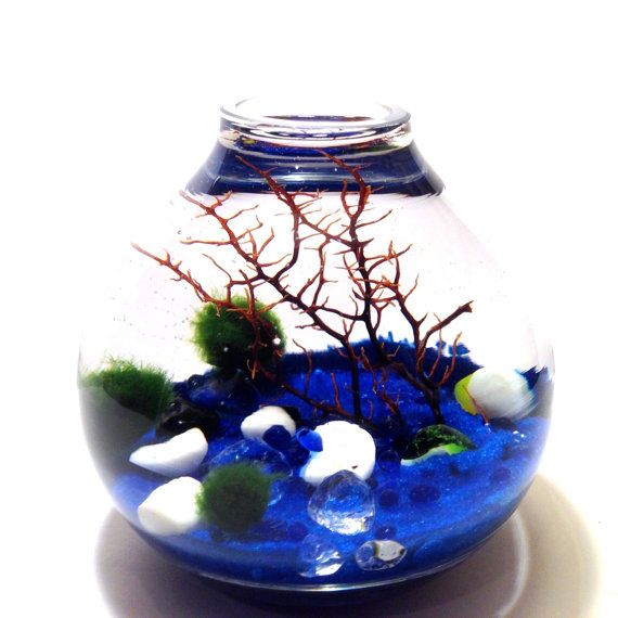 Do you have a child with allergies who wants a pet?  Marimo Moss Balls are more like a pet than a plant.