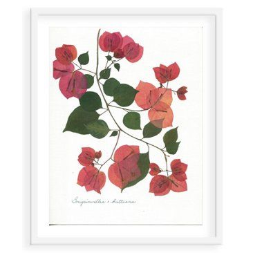 Check out this item at One Kings Lane! Flat Flower, Bougainvillea x Buttiana