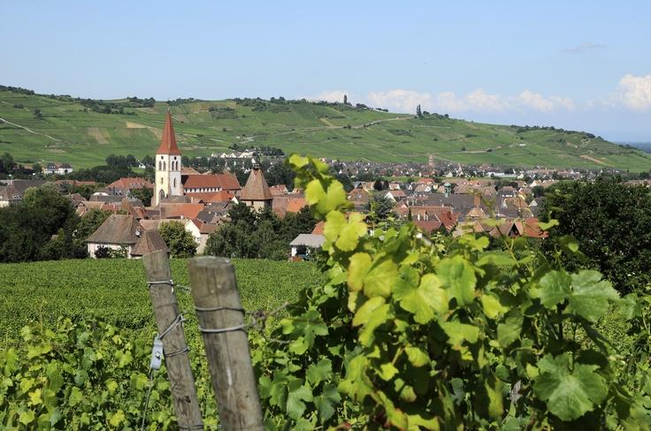 Le village d' #Ammerschwihr et l'église Saint-Martin vus depuis les #vignes