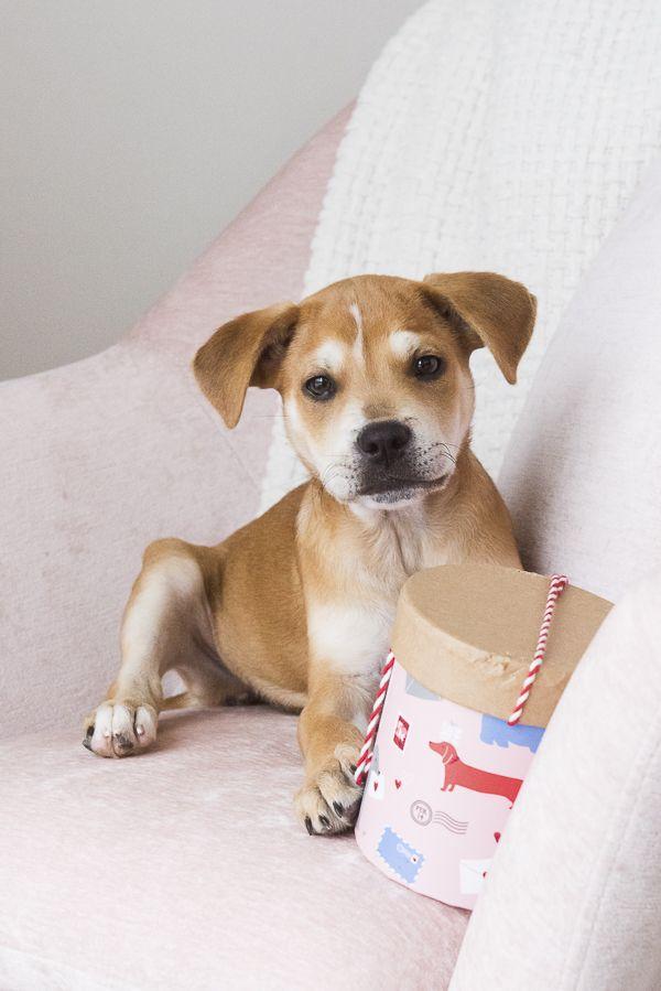 ©Alice G Photography   lifestyle dog portraits, puppy love, DIY Valentine banana beet dog treats #sponsored @Wayfair.com