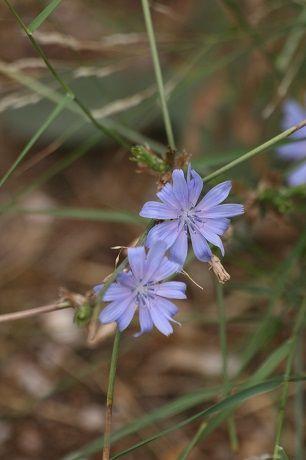Τα φαρμακευτικά φυτά της Ακρόπολης – GreenApple