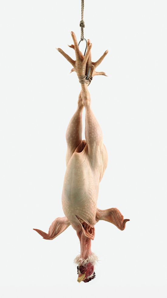 Still Life, this chicken is huge, at least 8 feet tall. By Ron Mueck.  Saw it in Paris, May 2013.