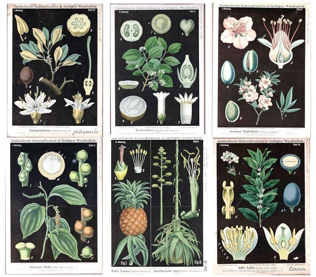 If you want an easy and inexpensive DIY route, you can find a pretty good selection of black botanicals at Vintage Printable. These are pictures from their site. Dwellings By DeVore: Black Botanicals