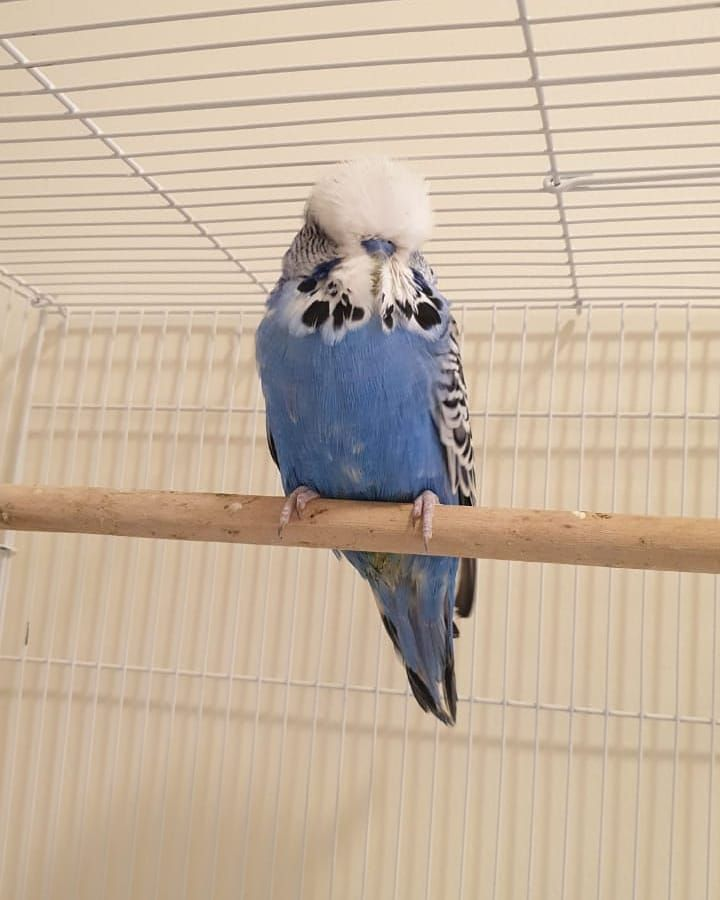 Pin By Mary Medeiros On طائر In 2021 Animals Parrot