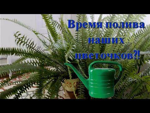 Полив растений.  Время полива комнатных растений.  Аквариумная вода для ...