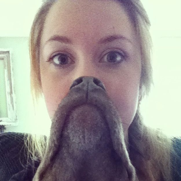 The 18 Most Epic Dog Beards Of All Time