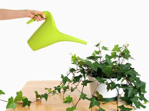 tips for indoor plants