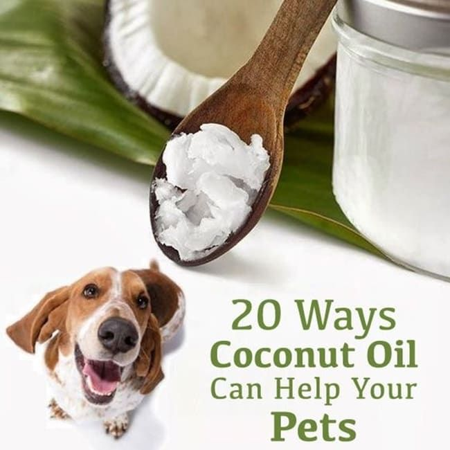 Pin By Hopecampbell2004 On All Things Shih Tzu Your Pet Coconut Oil Pets