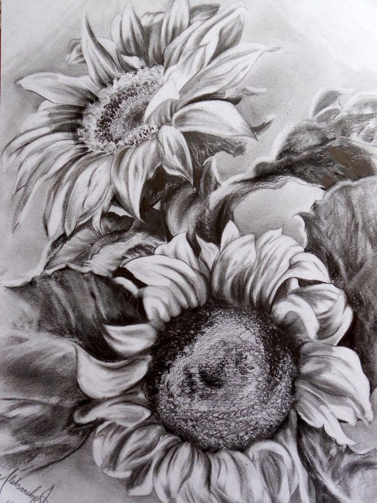 Sunflower Drawing Google Zoeken Plaatjes Sunflower