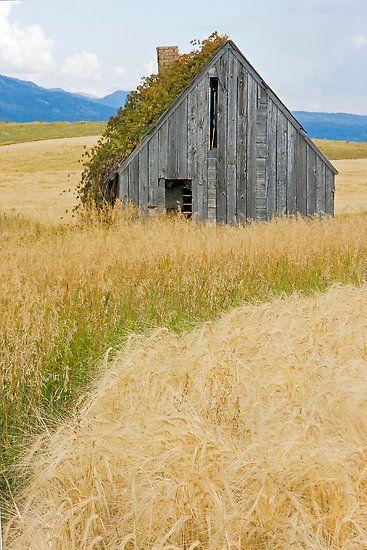 Barn in Swan Valley, Idaho