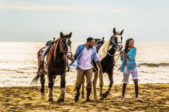 Siebert Realty Sandbridge Beach Virginia Beach Rentals VA Vacation Rentals Beach Home Condo Hotels: Giddy Up!