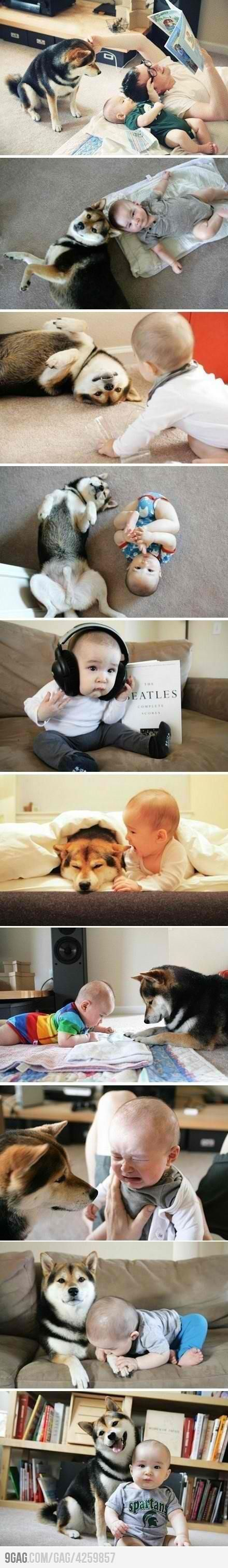 Hope I will find a friend like this for my children  Shiba Inu or Akita Inu?? It's likely to be Shiba Inu.