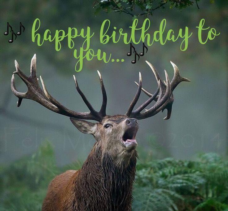 Happy Birthday Images With Deer Funny Happy Birthday Wishes Funny Happy Birthday Pictures Happy Birthday Animals
