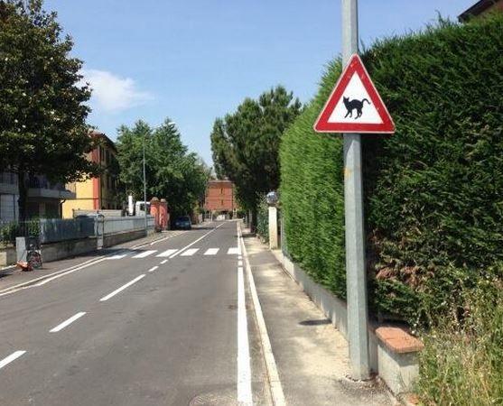 """""""Attenzione ai gatti vaganti"""". Debutta a Modena un nuovo segnale stradale di pericolo"""
