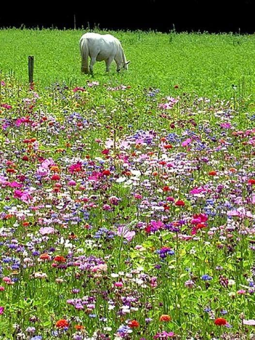 Les 25 meilleures id es concernant jardin de prairie sur for Tarif tonte gazon par paysagiste
