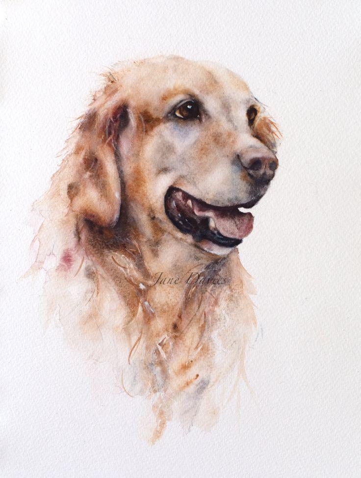 Pet portrait of a Golden Receiver painted by watercolour artist Jane Davies