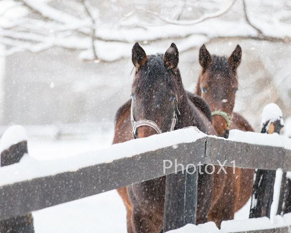 Horse Photography Winter Horse Art 8x10 Photo by PhotoX1 on Etsy
