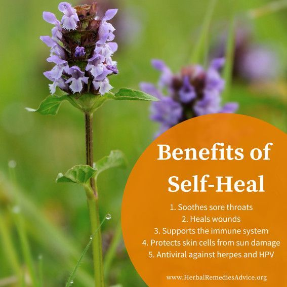 While not commonly used by many Western herbalists today, self-heal has a long history of use for healing wounds, both inside and outside the body, as well as for moving lymph and soothing sore throats.