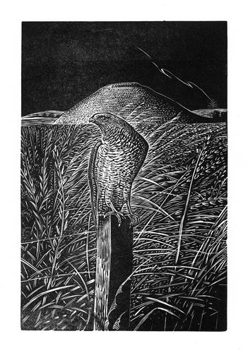 George Tute. Silbury Hill with Falcon. 2012. (wood engraving)