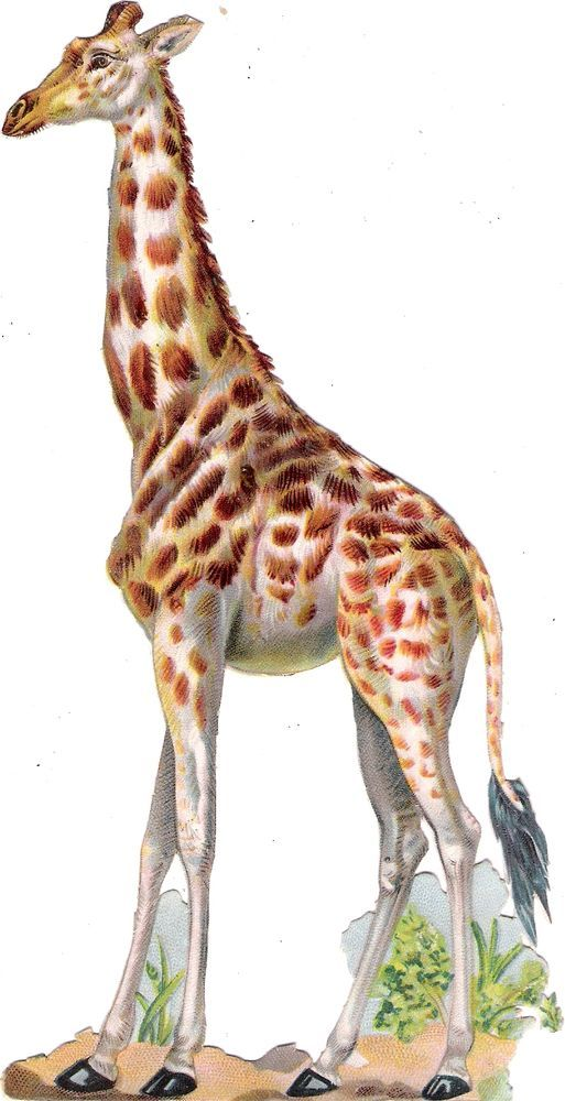 Oblaten Glanzbild scrap die cut chromo 19,8cm african animal Giraffe Tier Afrika