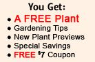 Great Garden Plants – Your Online Plant Nursery for Thuja Green Giant, Flowering Shrubs, Perennials, KnockOut Roses, Grasses, Hedge Plants, Green Giant Thujas, Coneflowers, Hydrangeas, Heucheras, Sedums, Ornamental Grass, Burning Bush, Boxwood