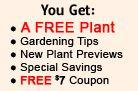 Great Garden Plants – Your Online Plant Nursery for Thuja Green Giant, Flowering Shrubs, Perennials, KnockOut Roses, Grasses, Hedge Plants, Green Giant Thujas, Coneflowers, Hydrangeas, Heucheras, Sedums, Ornamental Grass, Burning Bush, Boxwood