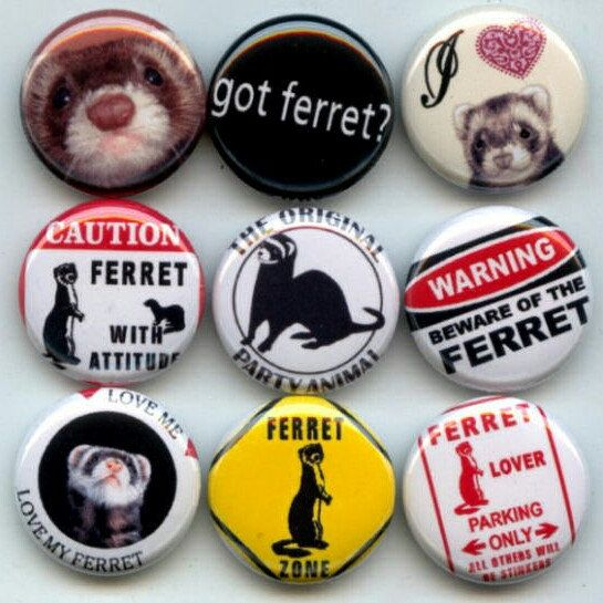 Ferrets I Love My Pet Ferret Weasel pinback button set by Yesware11 on Etsy.. Click for details!