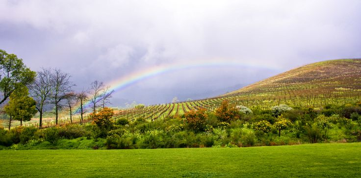 Rainbows in the wine lands #ecotravel #africatravel #africatrip #capetown #rainbow #unicornlife #winetasting #winery #winerylife #sommelier #sustainablewine #sustainablewinery #ecofriendly #sustainabletravel