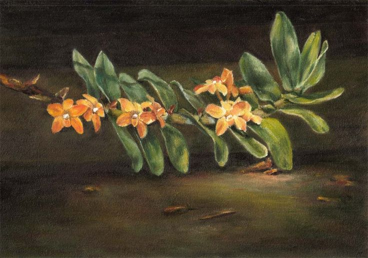 Wild orchid (Dendrobium) by Maga Fabler; oil on canvas panel