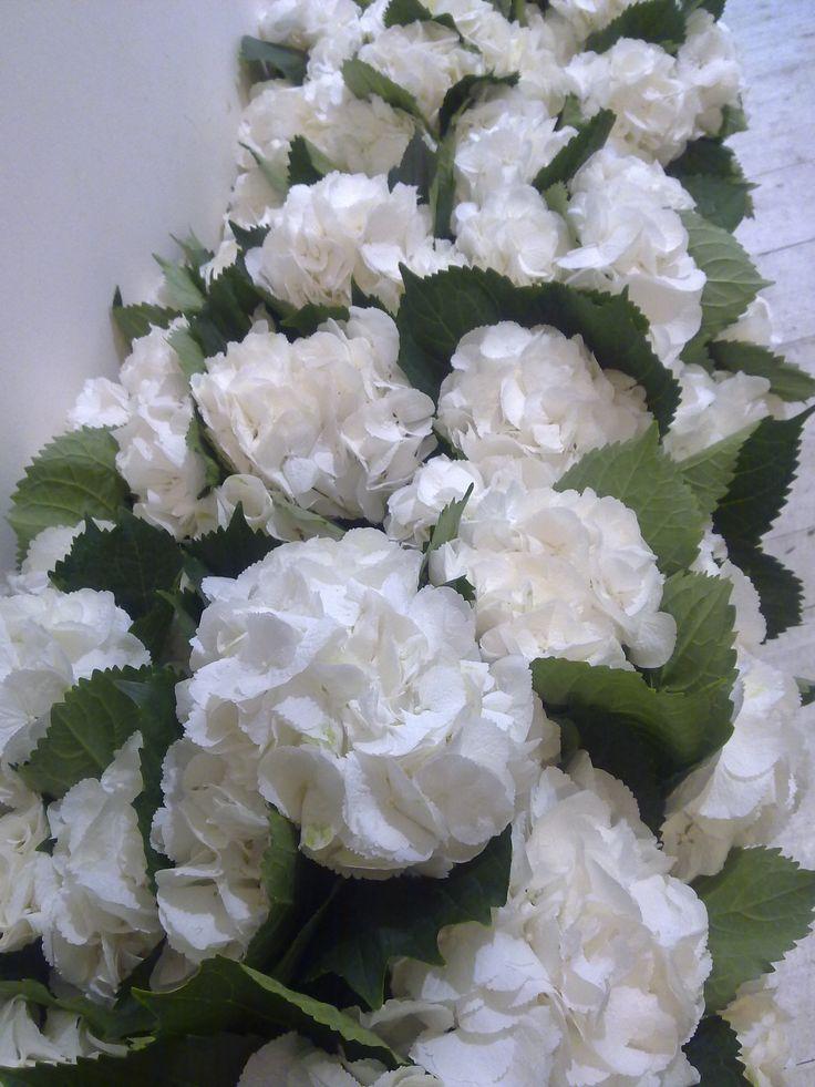 Pi di 25 fantastiche idee su ortensie bianche su for Ortensie bianche