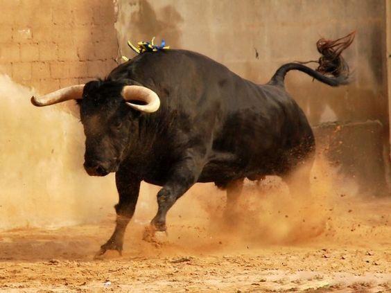 Toro aqui !