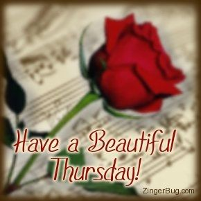 Have a beautiful thursday quote flower rose thursday thursday quotes happy thursday happy thursday pictures happy thursday images