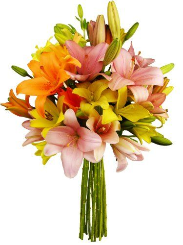 12 Stem Assorted Asiatic Lily Bunch - Without Vase - http://yourflowers.us/12-stem-assorted-asiatic-lily-bunch-without-vase/