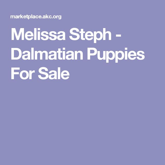 Melissa Steph - Dalmatian Puppies For Sale