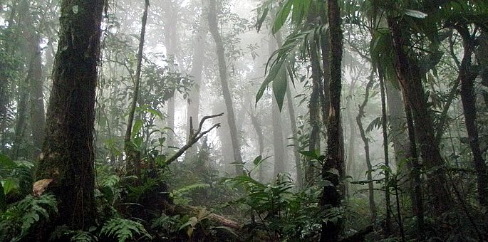 La Amistad International Park in Costa Rica - South Central Region