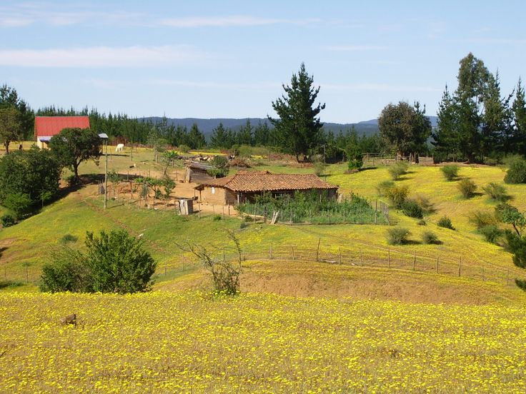 Region del Maule