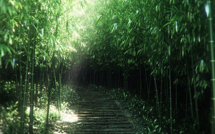 Bambu Ağaçları Ve Düz Merdivenler HD Wallpapers