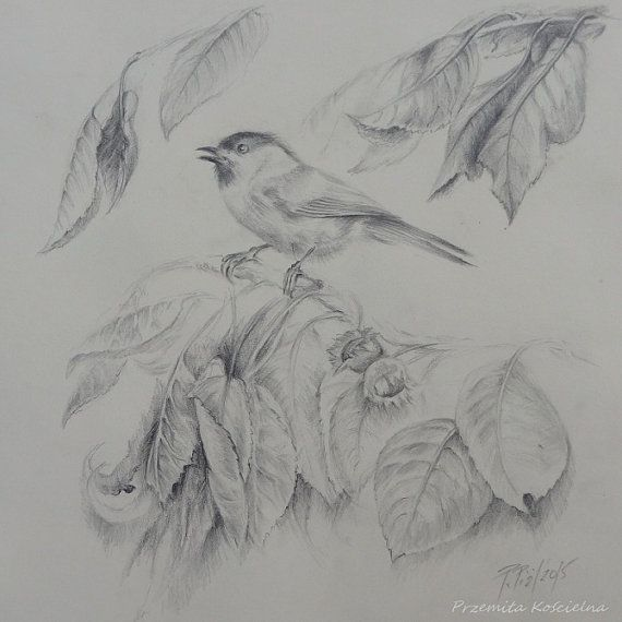 TIT BIRD Original graphite pencil drawing Hand by CanisArtStudio
