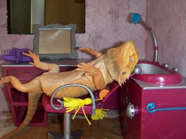 They'll go with you to the spa, 'cause they like to relax. | 21 Reasons You Need To Start Hanging Out With Bearded Dragons