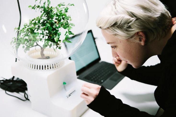 Apakah Anda penasaran dengan isi tanaman? Teknologi ini membantu komunikasi antara tanaman dan manusia loh! #eannovate #teknologi #microsoft #tanaman #bicaradengantanaman #inovatif